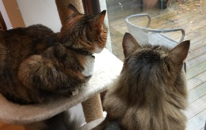 2 cats looking out of a window